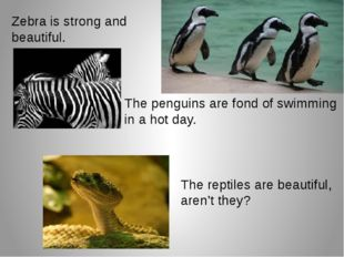 Zebra is strong and beautiful. The penguins are fond of swimming in a hot day