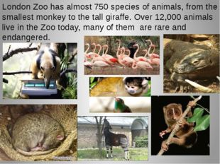 London Zoo has almost 750 species of animals, from the smallest monkey to the