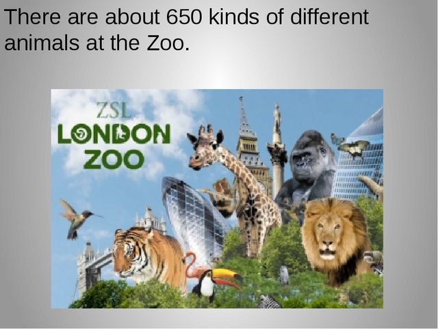 There are about 650 kinds of different animals at the Zoo.