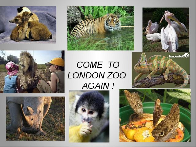 COME TO LONDON ZOO AGAIN !