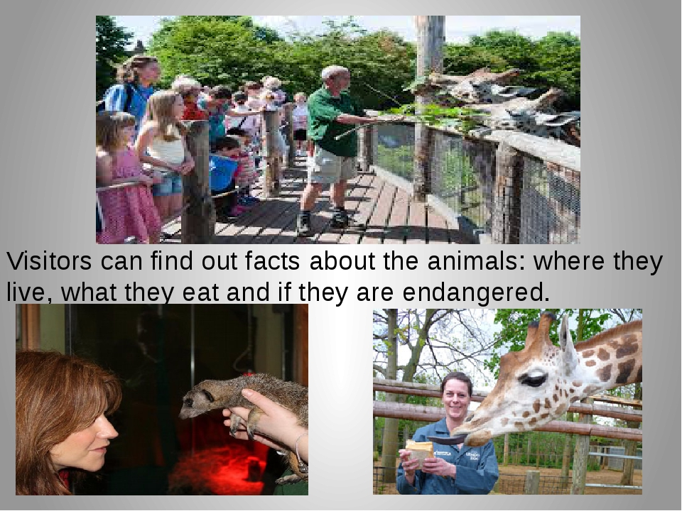 Visitors can find out facts about the animals: where they live, what they eat...
