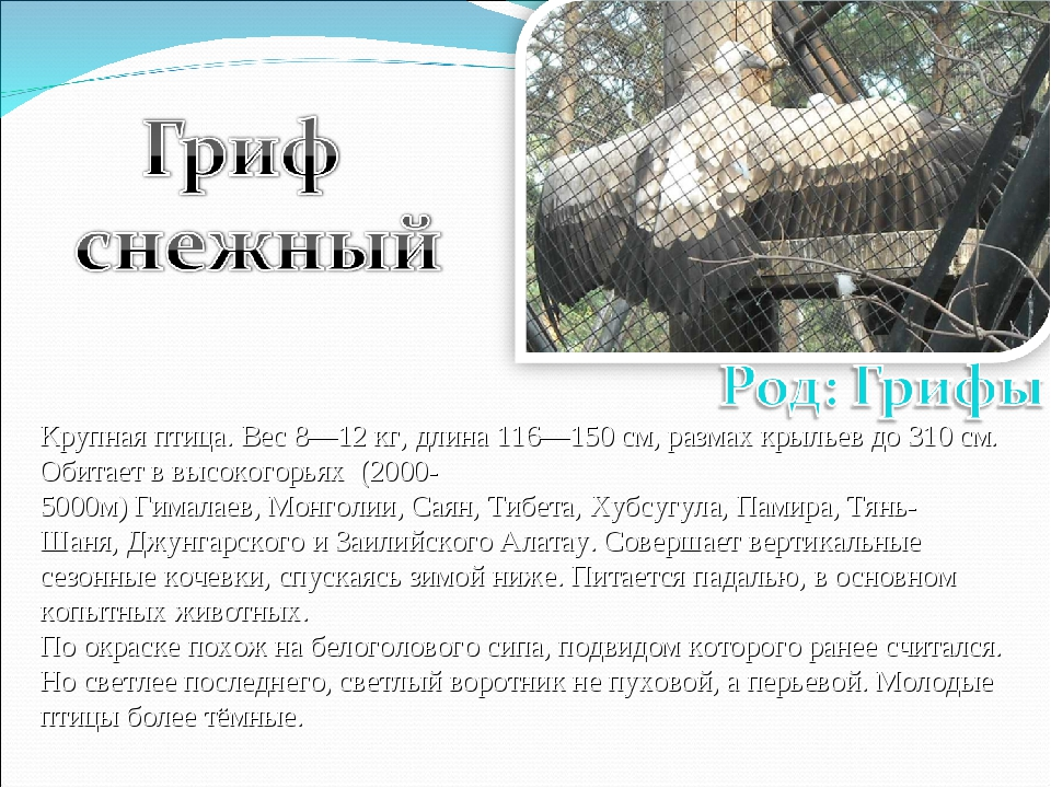Крупная птица. Вес 8—12кг, длина 116—150см, размах крыльев до 310см. Обита...