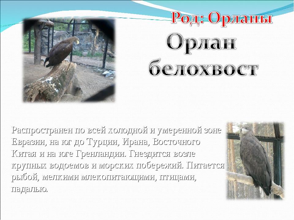 Распространен по всей холодной и умеренной зоне Евразии, на юг до Турции, Ира...