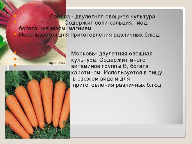 Свекла - двулетняя овощная культура. Содержит соли кальция, йод, богата желе...