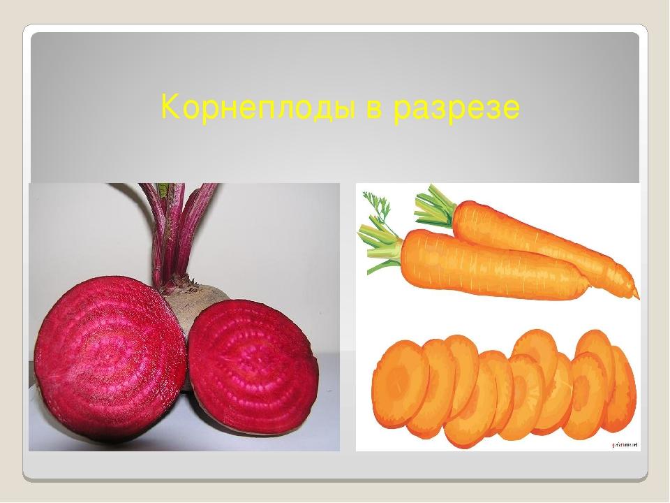 Корнеплоды в разрезе