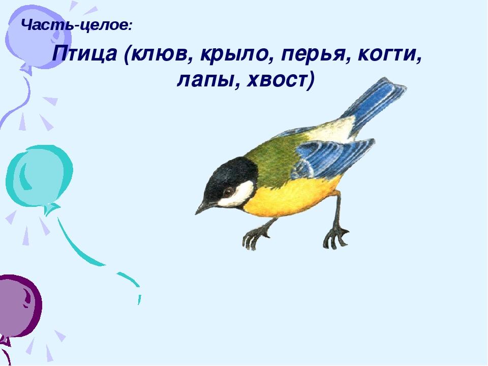 Часть-целое: Птица (клюв, крыло, перья, когти, лапы, хвост)