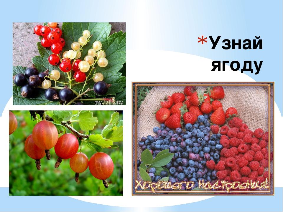 Узнай ягоду