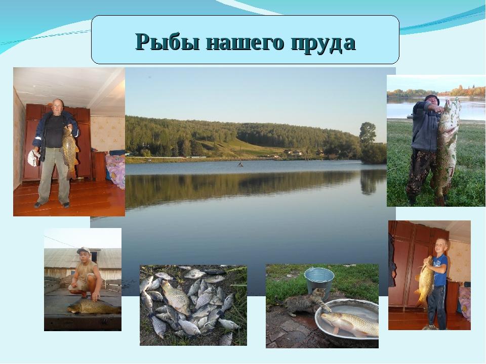 Рыбы нашего пруда