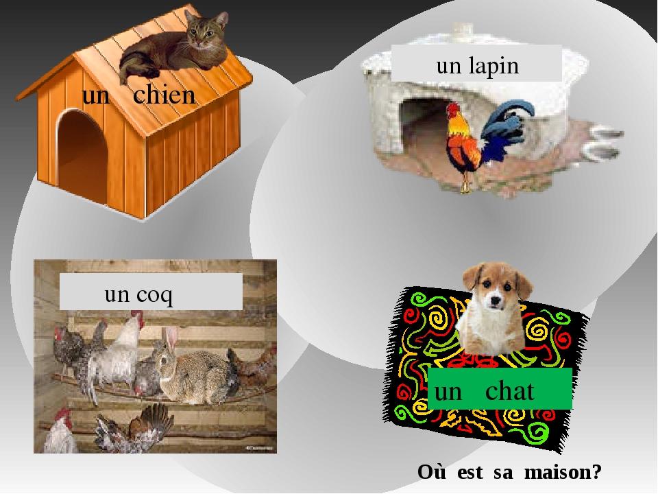 un chien un chat un lapin un coq Où est sa maison?