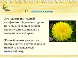 VI. Открытие нового. . Это одуванчик, желтый сарафанчик. Одуванчик одним из