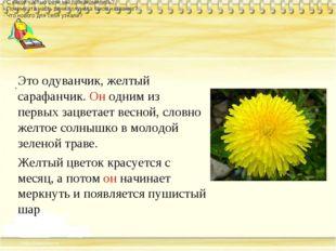 . Это одуванчик, желтый сарафанчик. Он одним из первых зацветает весной, сло