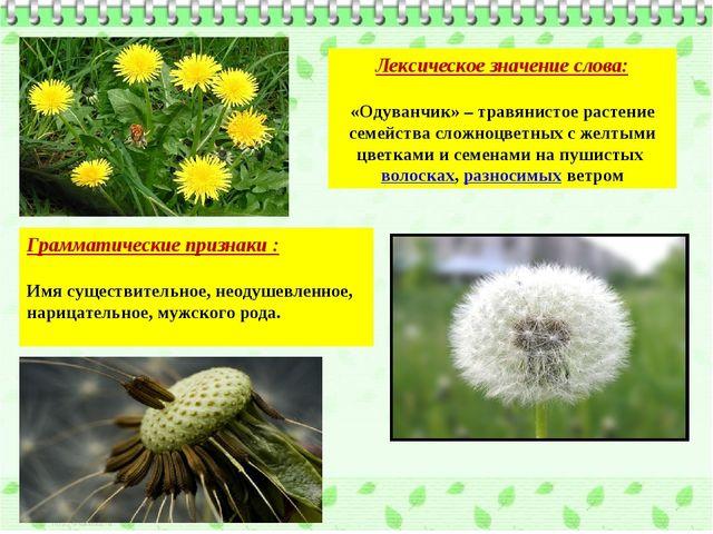 Лексическое значение слова: «Одуванчик» – травянистое растение семейства слож...