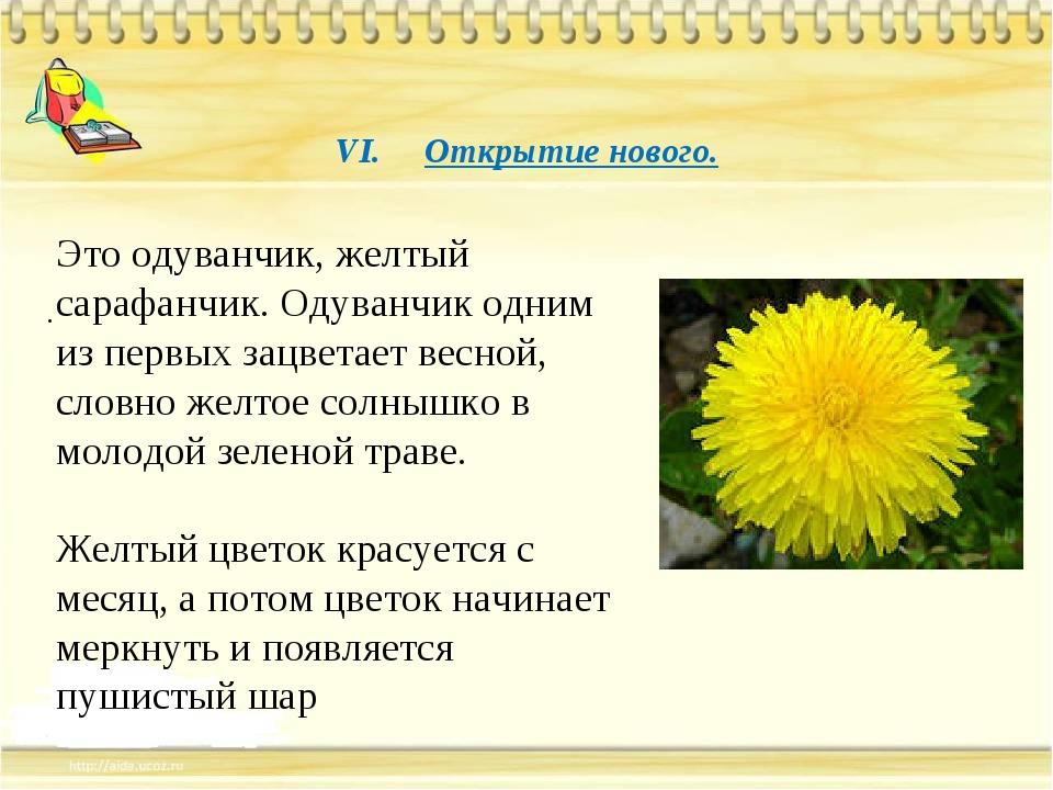 VI. Открытие нового. . Это одуванчик, желтый сарафанчик. Одуванчик одним из...