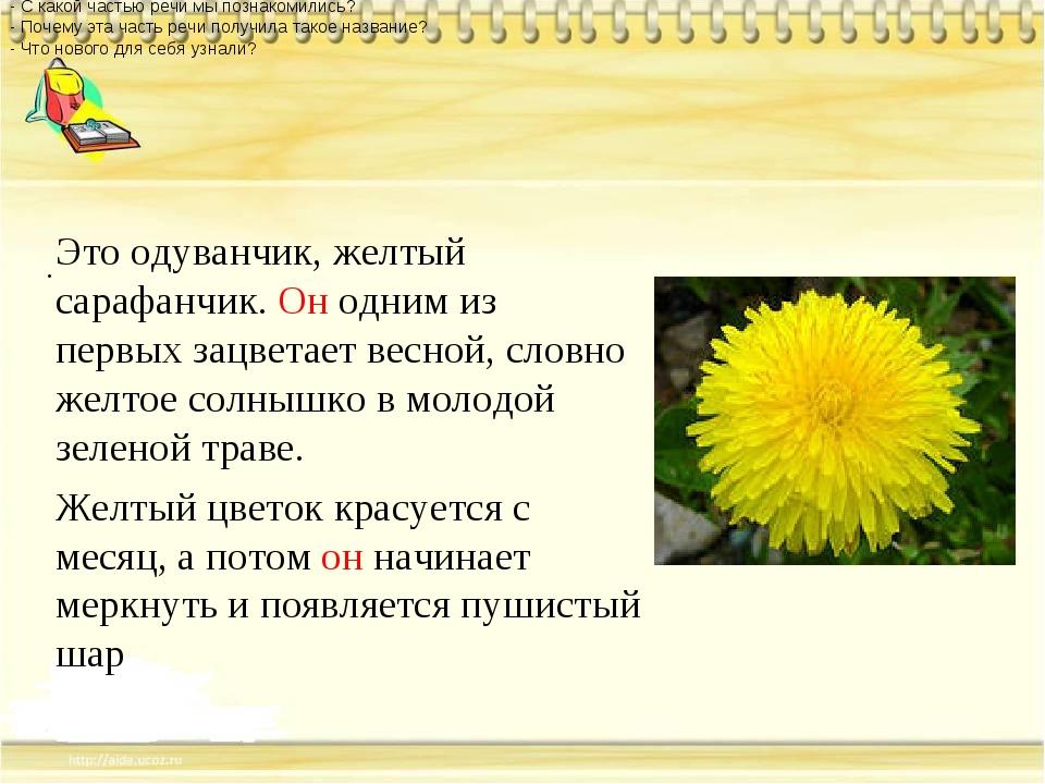 . Это одуванчик, желтый сарафанчик. Он одним из первых зацветает весной, сло...