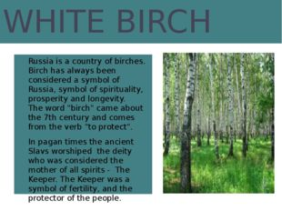 WHITE BIRCH Russia is a country of birches. Birch has always been considered