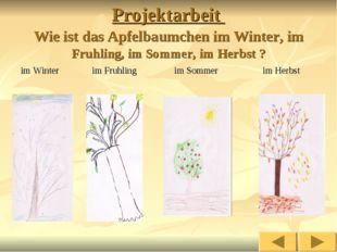 Projektarbeit Wie ist das Apfelbaumchen im Winter, im Fruhling, im Sommer, im