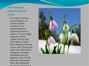 Подснежник, первый цветок земли Есть много легенд о подснежниках, но только в