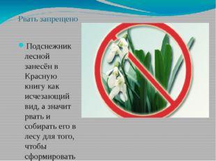 Рвать запрещено Подснежник лесной занесён в Красную книгу как исчезающий вид,