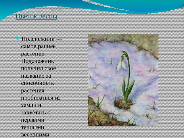 Цветок весны Подснежник — самое раннее растение. Подснежник получил свое назв...