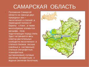 САМАРСКАЯ ОБЛАСТЬ Положение Самарсой области на границе двух природных зон –