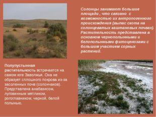 Полупустынная растительностьвстречается на самом юге Заволжья. Она не образу