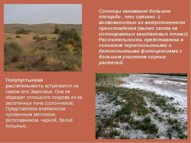 Полупустынная растительностьвстречается на самом юге Заволжья. Она не образу...