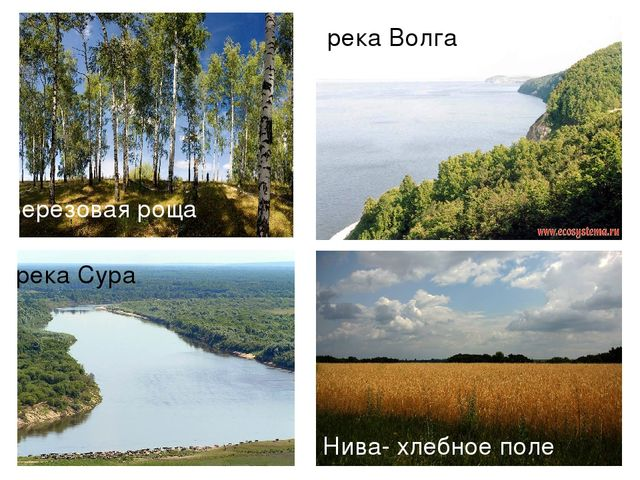 р. Сура река Сура река Волга Нива- хлебное поле Березовая роща