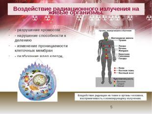 Воздействие радиационного излучения на живые организмы. - разрушение хромосо