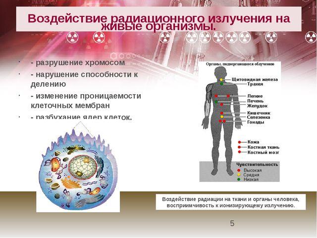 Воздействие радиационного излучения на живые организмы. - разрушение хромосо...