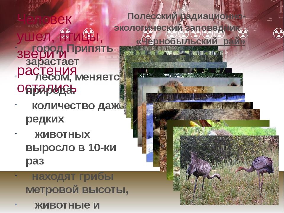 Человек ушел, птицы, звери и растения остались Полесский радиационно-экологич...
