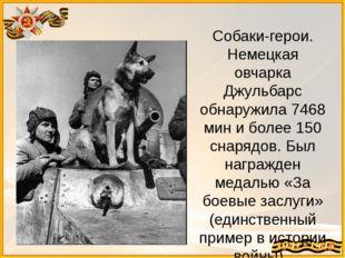 Собаки-герои. Немецкая овчарка Джульбарс обнаружила 7468 мин и более 150 снар