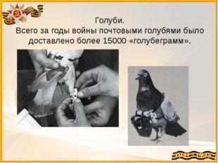 Голуби. Всего за годы войны почтовыми голубями было доставлено более 15000 «г