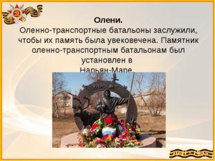 Олени. Оленно-транспортные батальоны заслужили, чтобы их память была увековеч