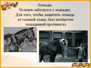 Лошади. Человек заботился о лошадях. Для того, чтобы защитить лошадь от газо