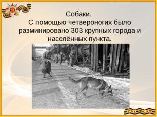Собаки. С помощью четвероногих было разминировано 303 крупных города и населё