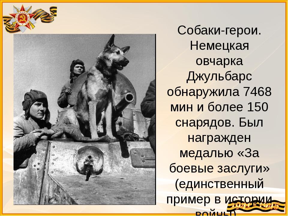 Собаки-герои. Немецкая овчарка Джульбарс обнаружила 7468 мин и более 150 снар...