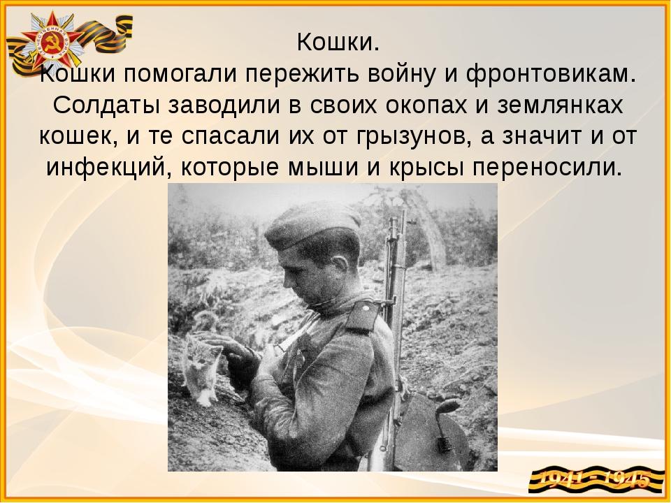 Кошки. Кошки помогали пережить войну и фронтовикам. Солдаты заводили в своих...