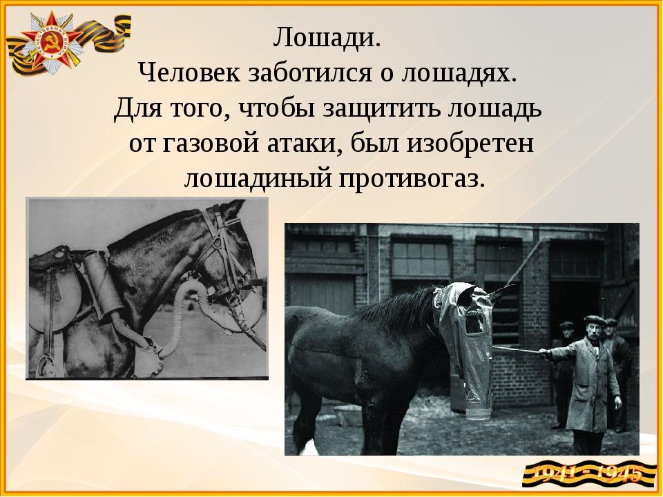 Лошади. Человек заботился о лошадях. Для того, чтобы защитить лошадь от газо...