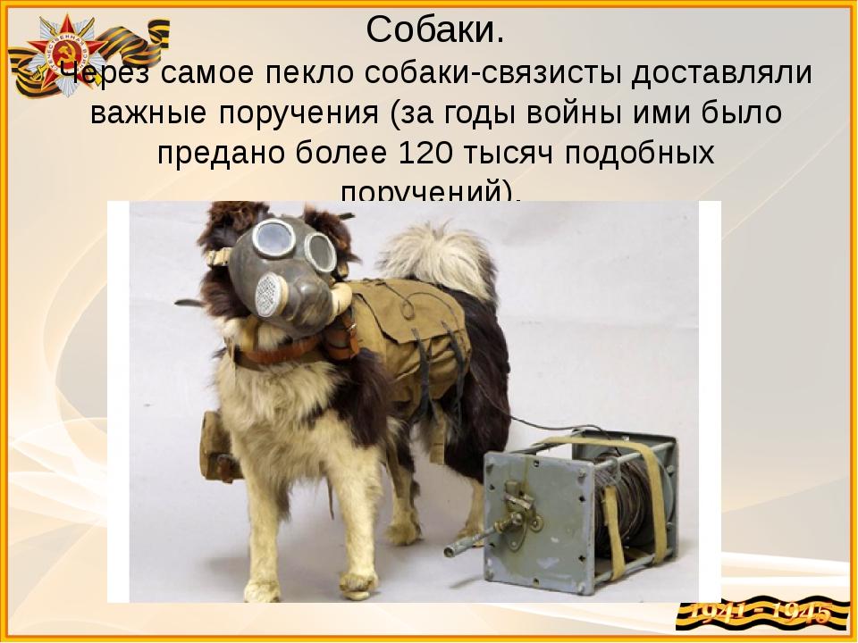 Собаки. Через самое пекло собаки-связисты доставляли важные поручения (за год...