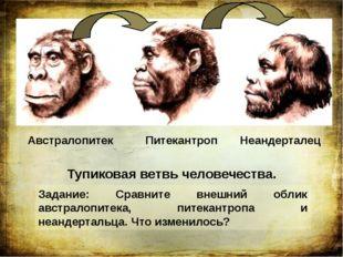 Австралопитек Питекантроп Неандерталец Тупиковая ветвь человечества. Задание: