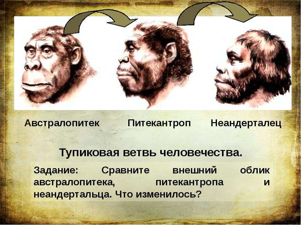 Австралопитек Питекантроп Неандерталец Тупиковая ветвь человечества. Задание:...