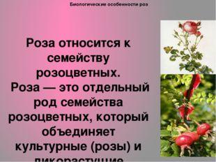 Биологические особенности роз Роза относится к семейству розоцветных. Роза —