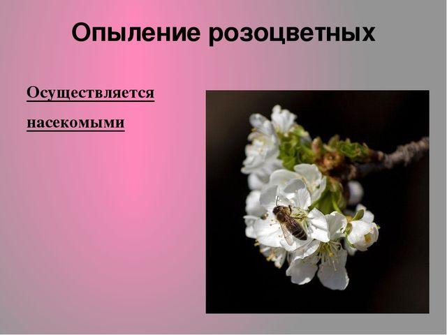 Опыление розоцветных Осуществляется насекомыми