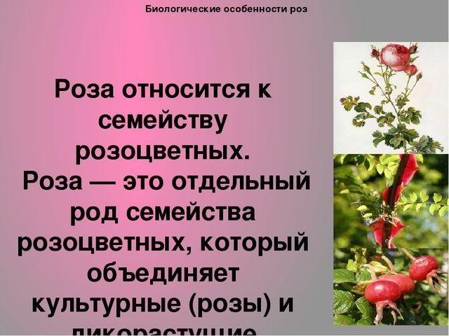 Биологические особенности роз Роза относится к семейству розоцветных. Роза —...