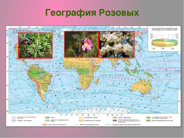 География Розовых