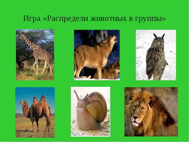 Игра «Распредели животных в группы»