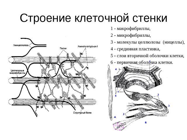 Строение клеточной стенки 1 - макрофибриллы, 2 - микрофибриллы, 3 - молекулы...