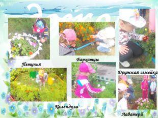 Цветочный калейдоскоп Наблюдение за цветами Петунья Бархатцы Дружная семейка