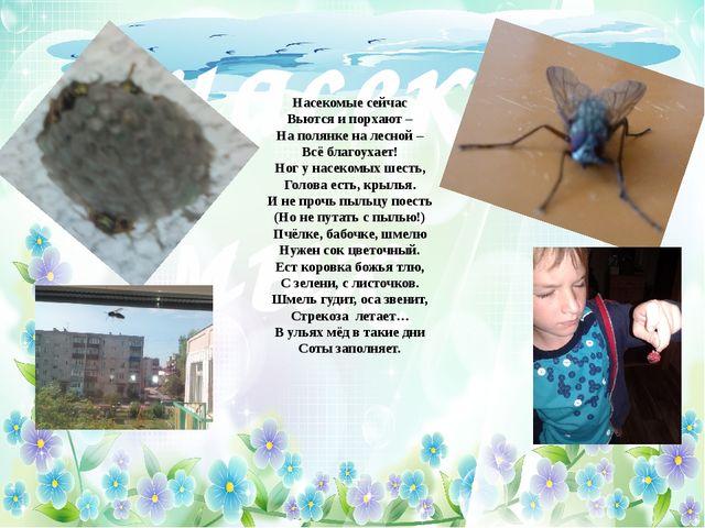 Мир насекомых Насекомые сейчас Вьются и порхают – На полянке на лесной – Всё...