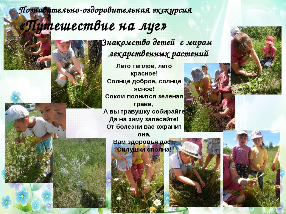 Знакомство детей с миром лекарственных растений Лето теплое, лето красное! Со...